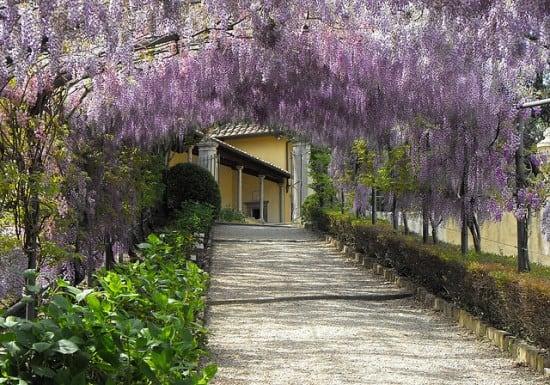 Beautiful wisteria awning