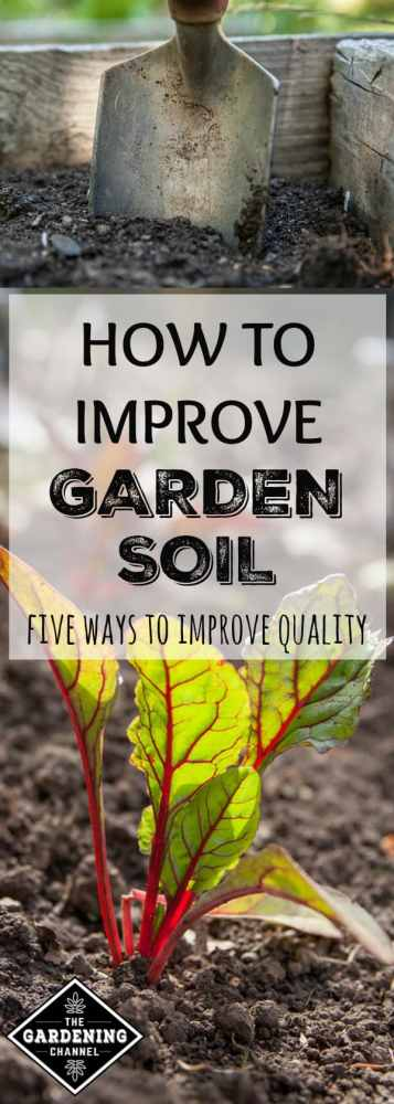 close of of soil and shovel in raised bed and close up of soil around swiss chard with text overlay how to improve garden soil five ways to improve quality