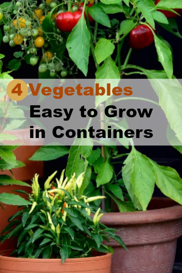 container vegetables growing on porch with text overlay four vegetables easy to grow in containers