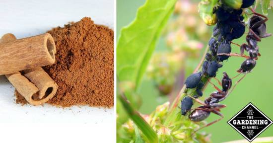 Natural Way To Get Rid Of Ants Hills