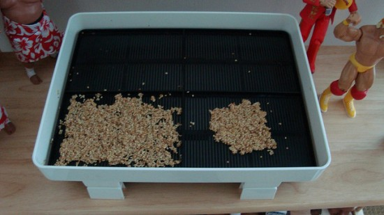 Growing sprouts via a tray