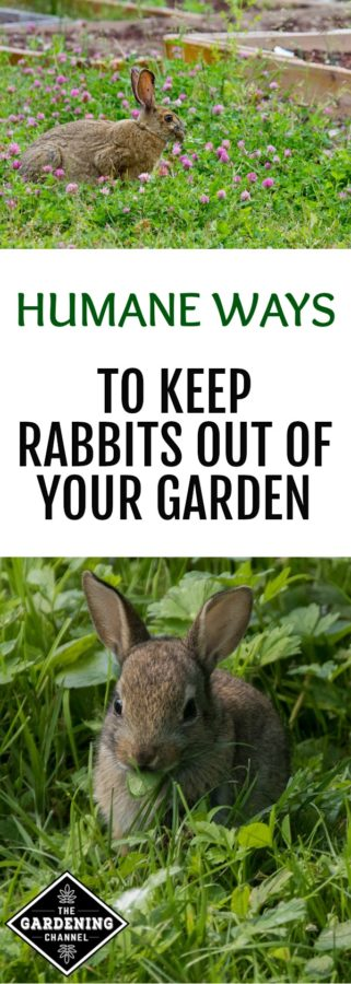 related how to keep rabbits out of the garden - How To Keep Rabbits Out Of Garden