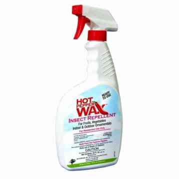 Use hot pepper wax to repel grasshoppers