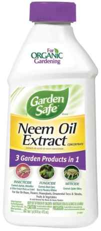 Neem oil for grasshopper management