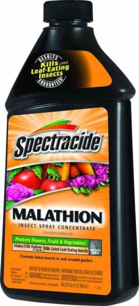 Spectracide for aphid control