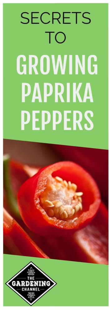 how to grow paprika peppers