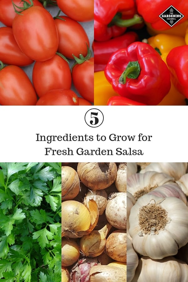 roma tomates bell peppers parsley onions garlic with text overlay five ingredients to grow for fresh garden salsa
