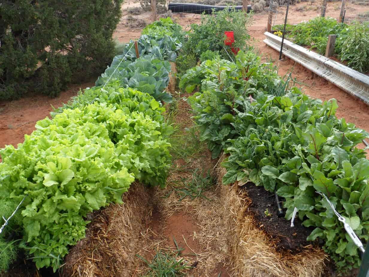 Straw Bale Gardening 101: An Introduction - Gardening Channel on Gardening  id=63461