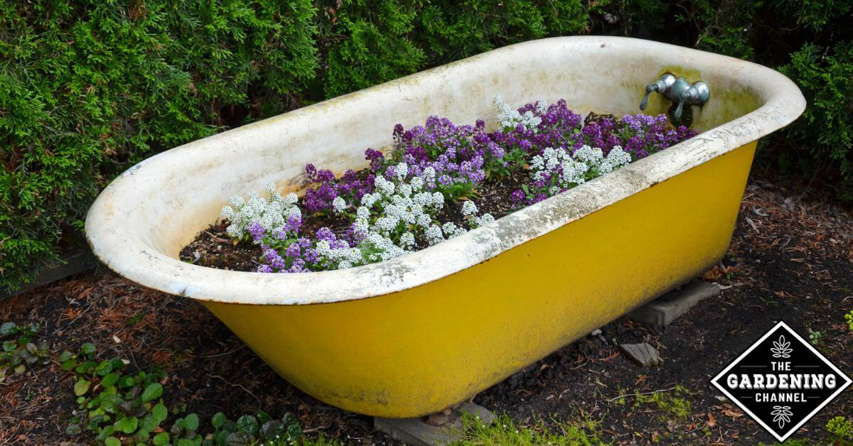Easy Raised Bed Garden Idea Plant A Vintage Bathtub Gardening