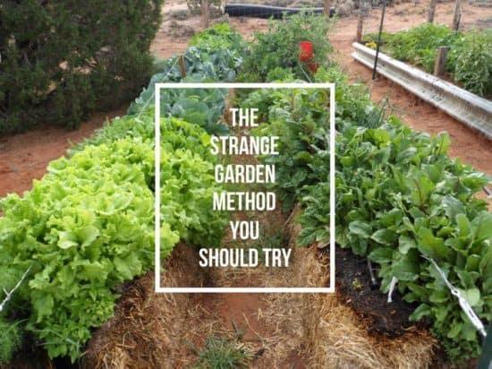 learn to make straw bale garden