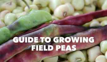 Growing Guide for Southern Field Peas and Cowpeas