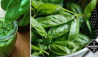 Guide to Making Pesto