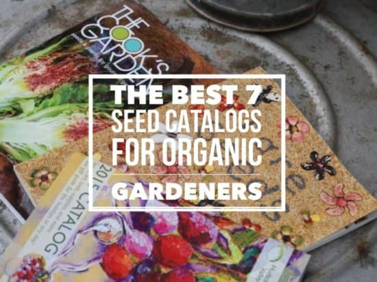 7 great seed catalogs for organic gardeners