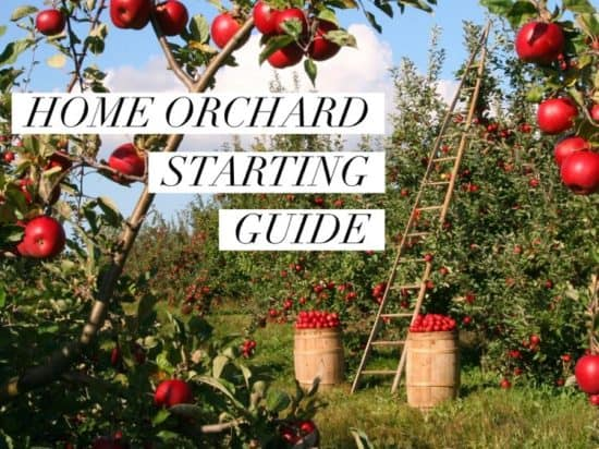 Starting Guide for Home Orchards