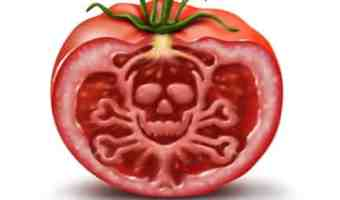 The 7 Deadly Sins of Tomato-Growing & How to Avoid Them