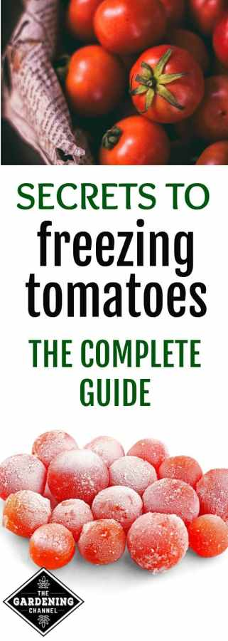How To Freeze Tomatoes The Go To Guide To Freezing Your Tomato Harvest Gardening Channel