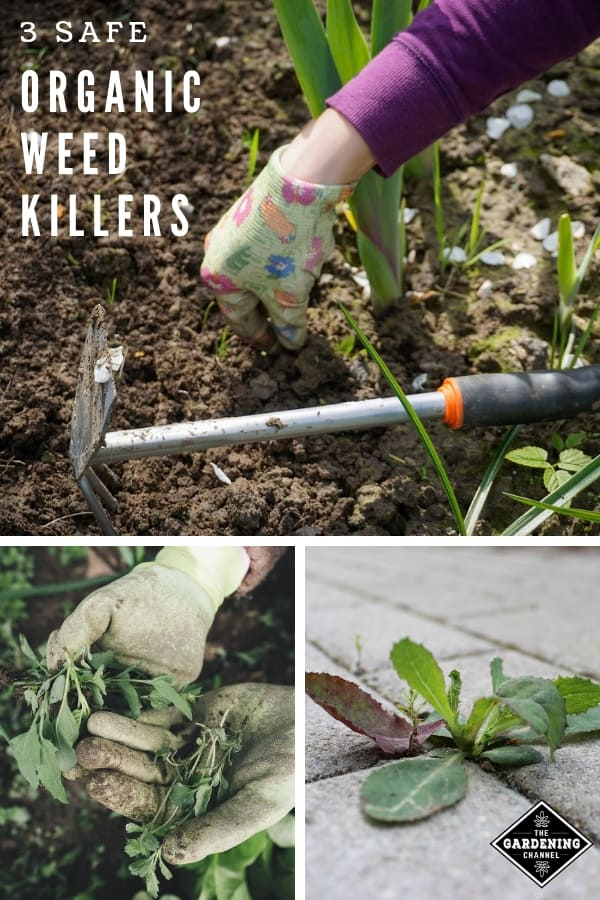 pulling weeds in garden and landscape with overlay text three safe organic weed killers