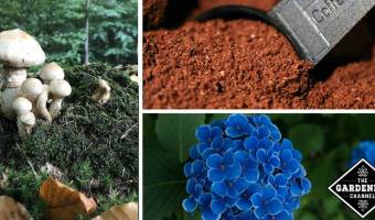 25 Weird Ways to Use Coffee and Coffee Grounds