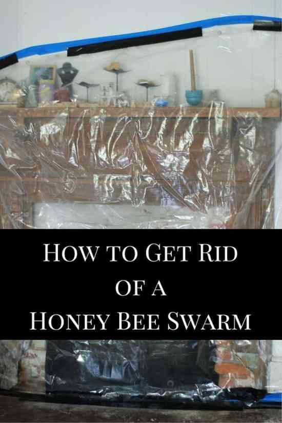 Get Rid of Honey Bee Swarm in House
