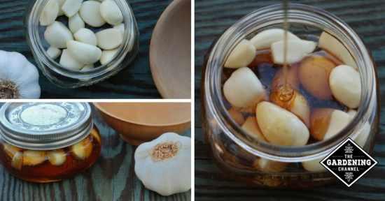 Natural Remedy Honey Garlic