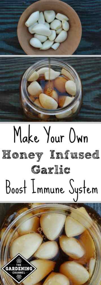 prevent colds and flus with garlic infused with honey