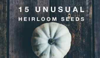 15 fun to grow unusual heirloom seeds