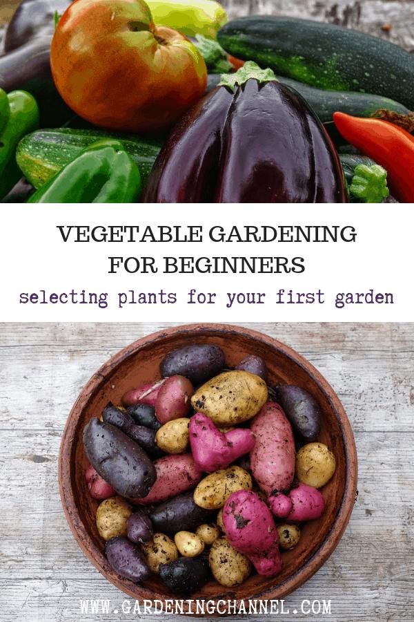 vegetable garden harvest potato harvest with text overlay vegetable gardening for beginners selecting plants for your first garden