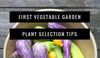 Choosing Plants and Gardening Tips for First Vegetable Garden