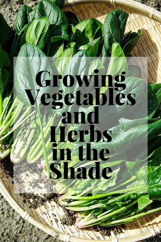 Growing Vegetables and Herbs in the Shade