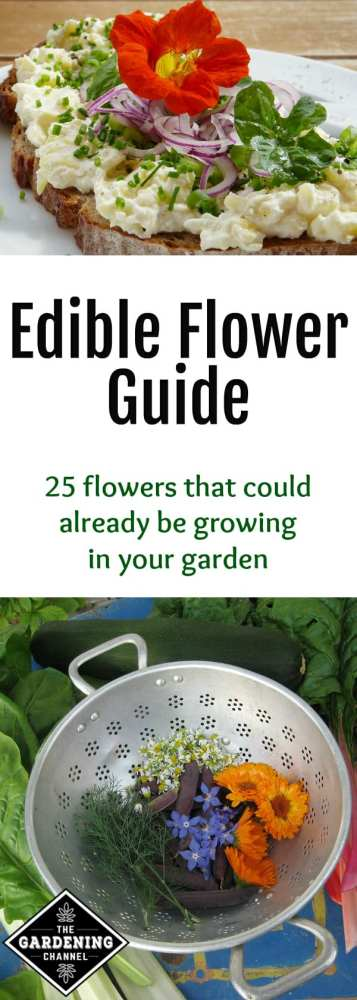 guide to growing and cooking with edible flowers