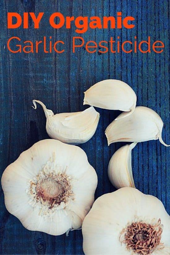 How to Make Garlic Foliar Spray