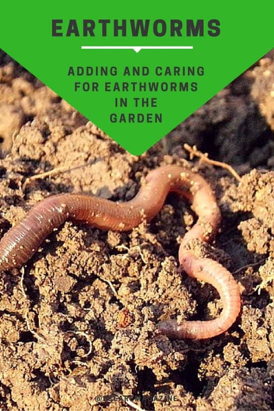 Adding and Caring for Earthworms in the Garden