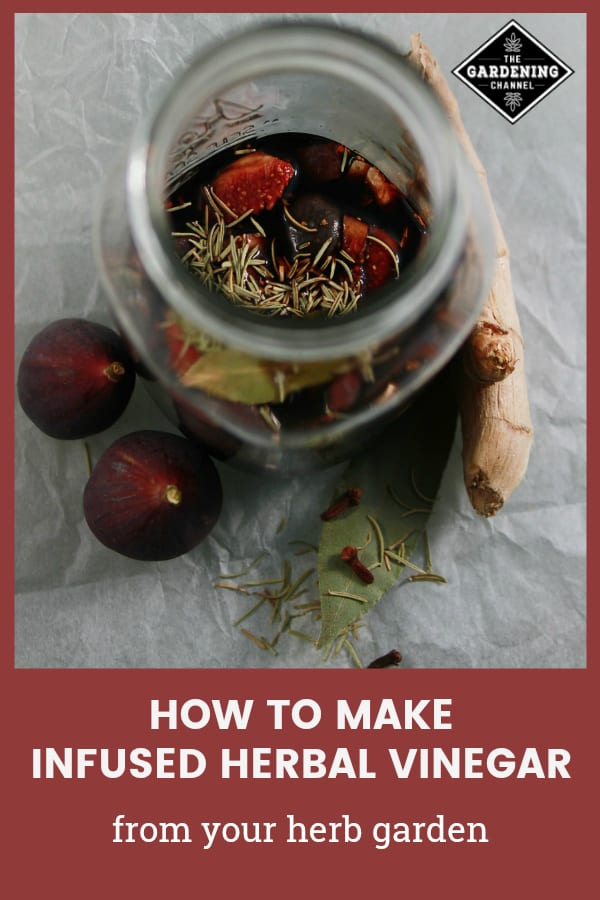 rosemary fig infused vinegar with text overlay how to make infused herbal vinegar from your herb garden
