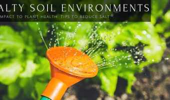 Too Much Salt in Soil Impacts Plant Health