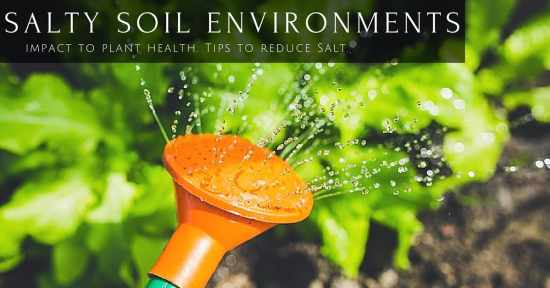 Too much salt in soil hurts plants