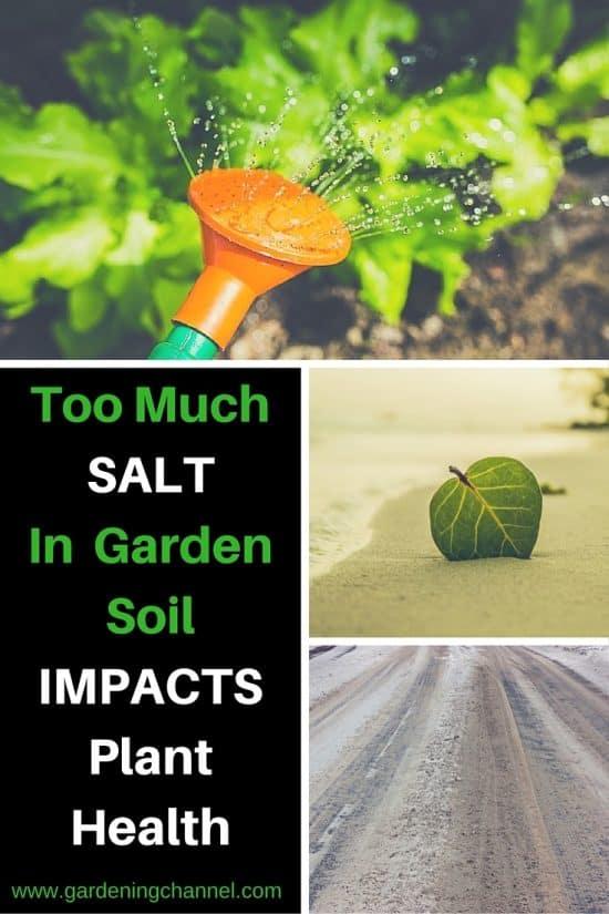 Too Much Salt in Garden Soil Hurts Plants