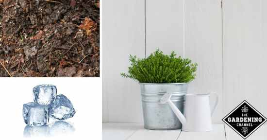 Make compost tea cubes