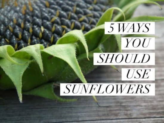 Five Uses for Sunflowers You Should Try
