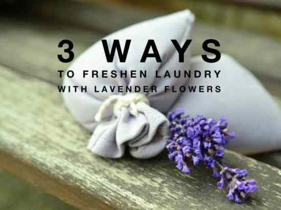 Freshen Laundry with Lavender Flowers
