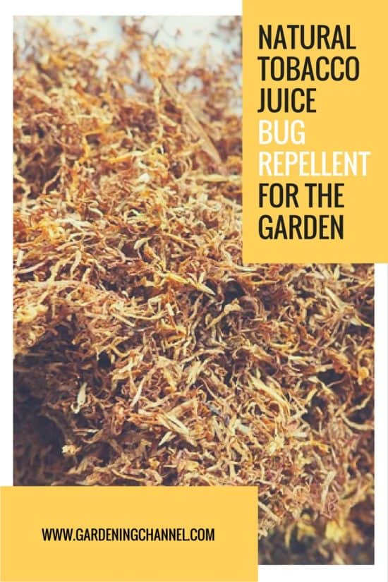 Natural Tobacco Juice Pest Repellent