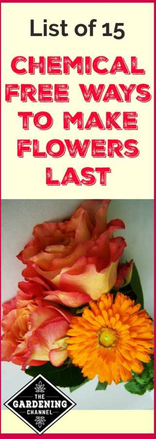 chemical free ways to save flowers