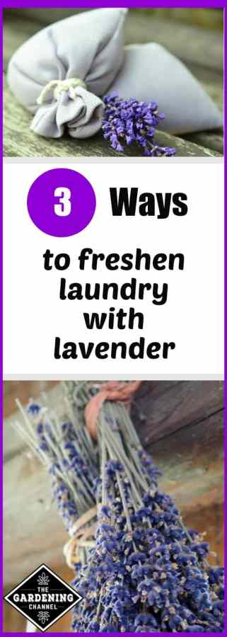 using lavender to freshen laundry