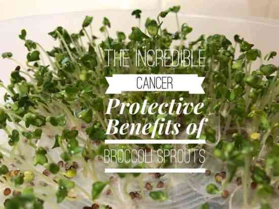 Broccoli Sprouts – 20 Times More Cancer Protective Compounds than Full Sized Broccoli