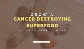grow turmeric in containers