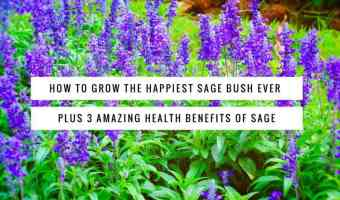 Learn to grow sage