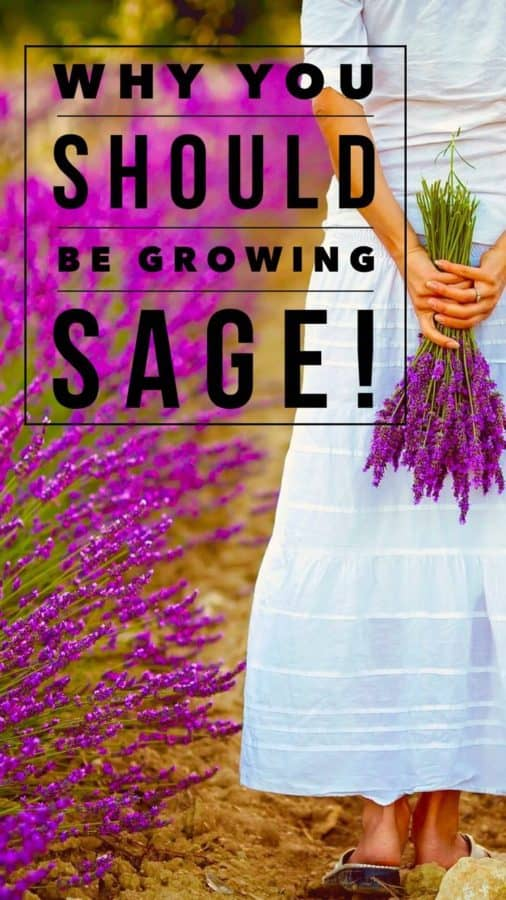 Grow super healthy sage in your garden this year