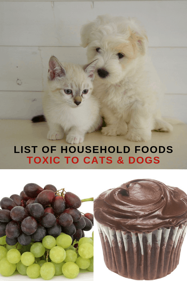 cat with dog grapes chocolate cupcake with text overlay list of household foods toxic to cats and dogs