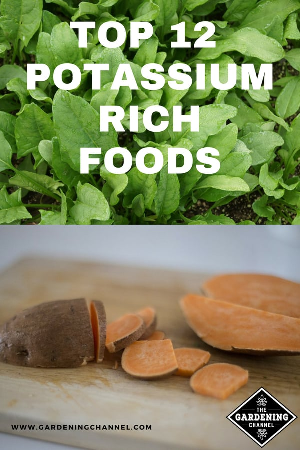spinach in garden and sweet potato on cutting board with text overlay 12 top potassium rich foods