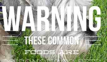 List of Common Household Foods That Are Toxic to Dogs and Cats