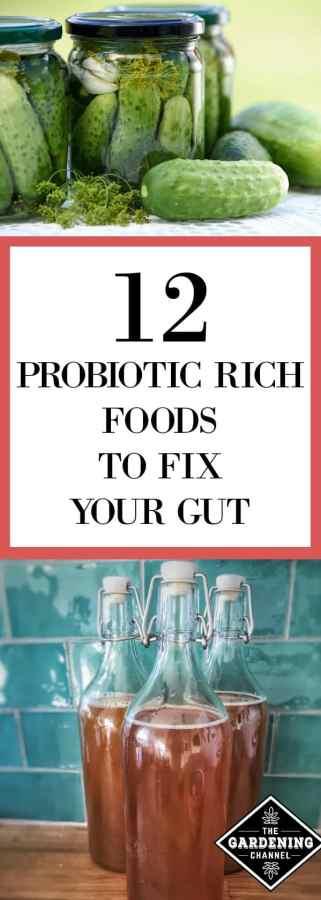Probiotic foods for Gut Health